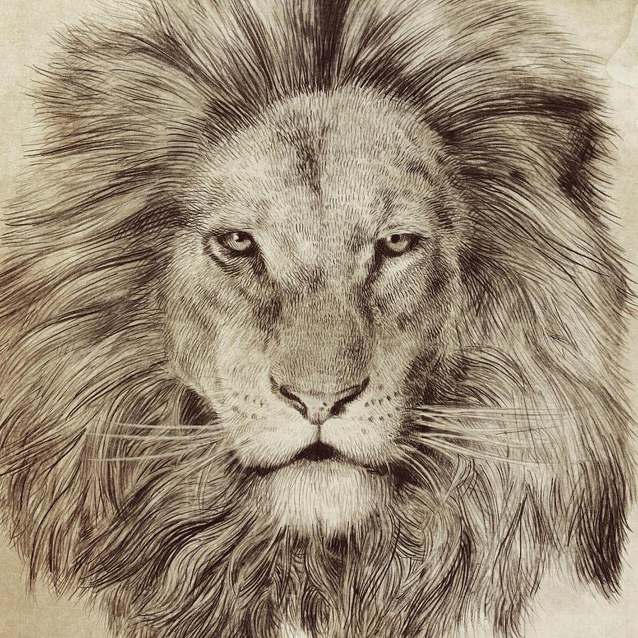 Lion Drawing - Leo by Eric Fan