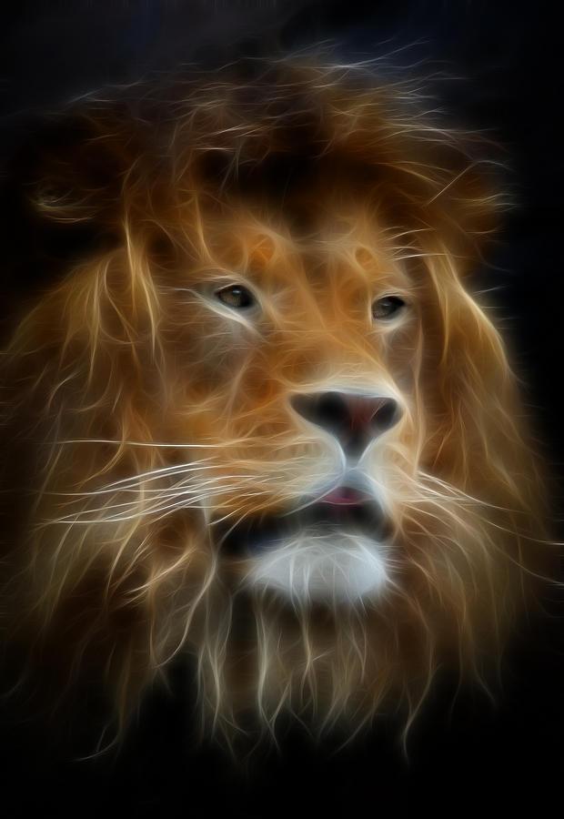 Leo The Lion Photograph By Athena Mckinzie