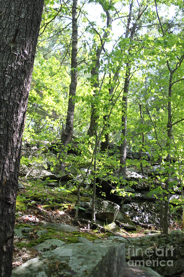 Crow Hills Photograph - Leominster Massachusetts State Reservation by Spirit Baker
