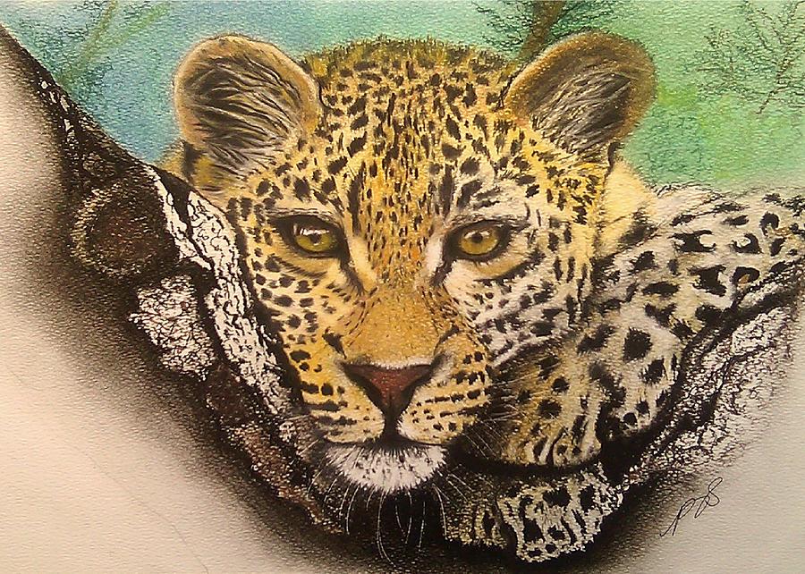Animal Drawing - Leopard In A Tree I. by Paula Steffensen