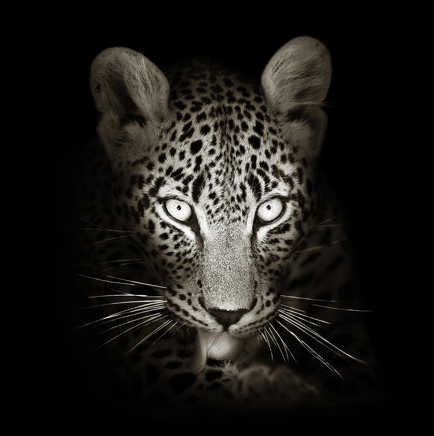 Leopard Photograph - Leopard Portrait In The Dark by Johan Swanepoel