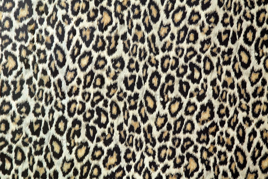 Leopard Skin Texture Or Fabric By S Cphoto
