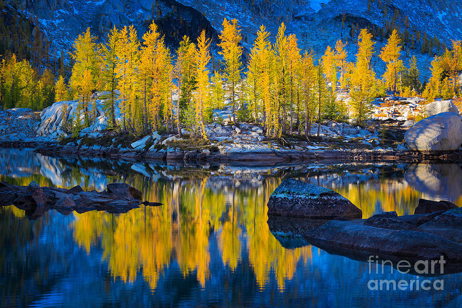 Alpine Lake Photograph - Leprechaun Tamaracks by Inge Johnsson