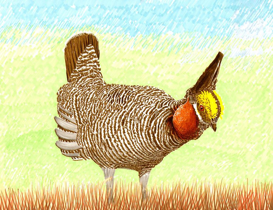 High Plains Chicken Painting - Lesser Prairie Chicken by Jack Pumphrey