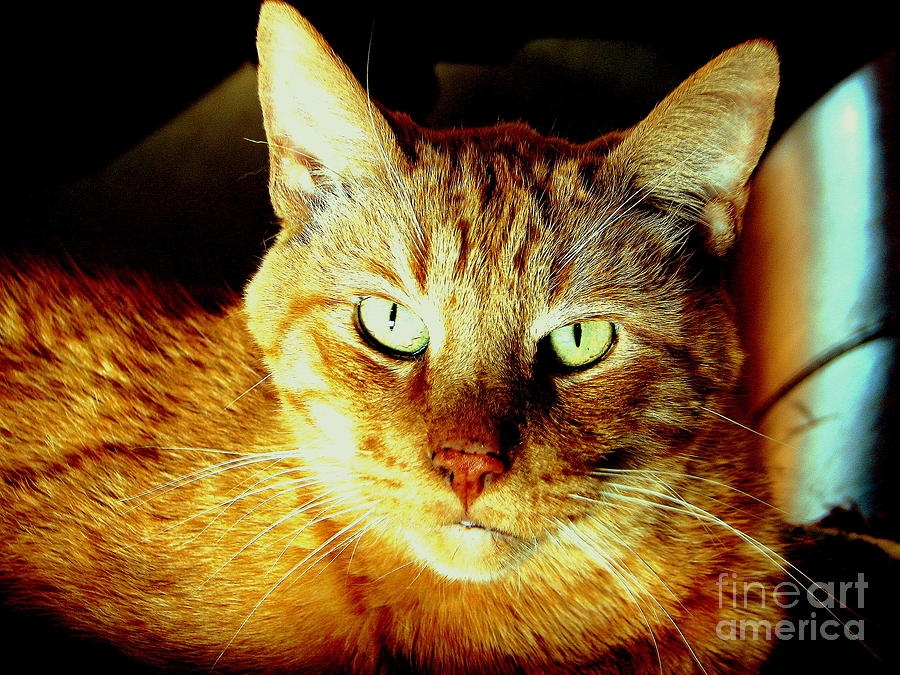 Cat Photograph - Lester The Molester by Jodie  Scheller