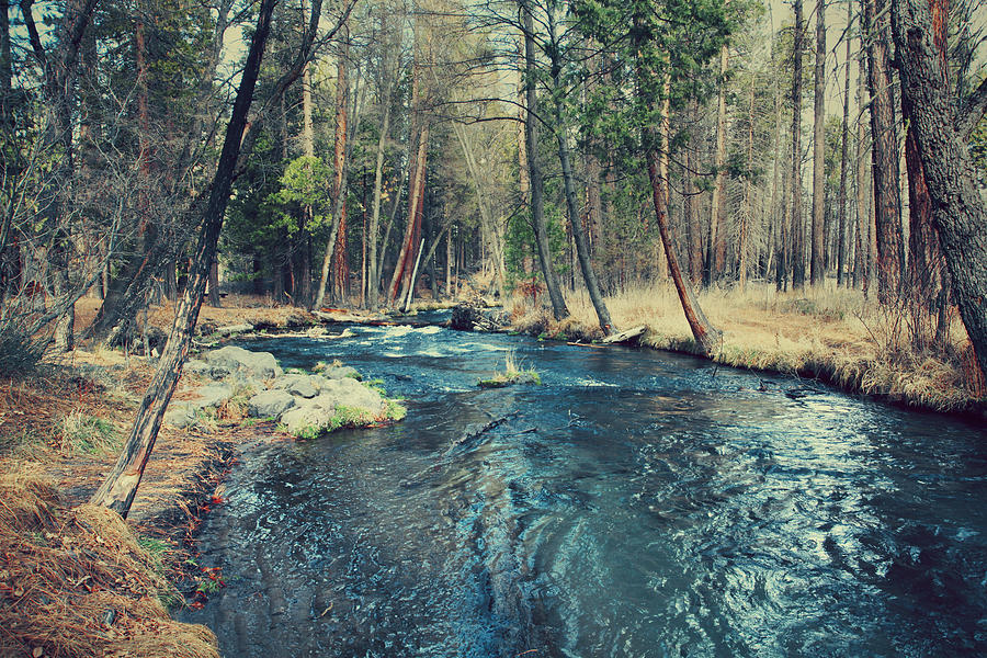 Hat Creek Photograph - Let It All Go by Laurie Search