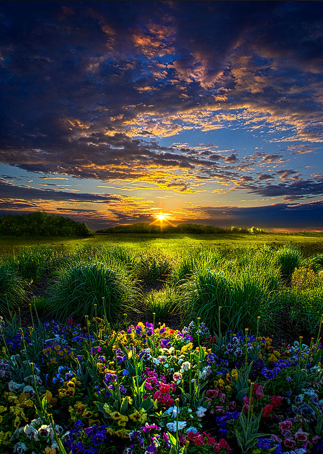Flowers Photograph - Let It Be by Phil Koch