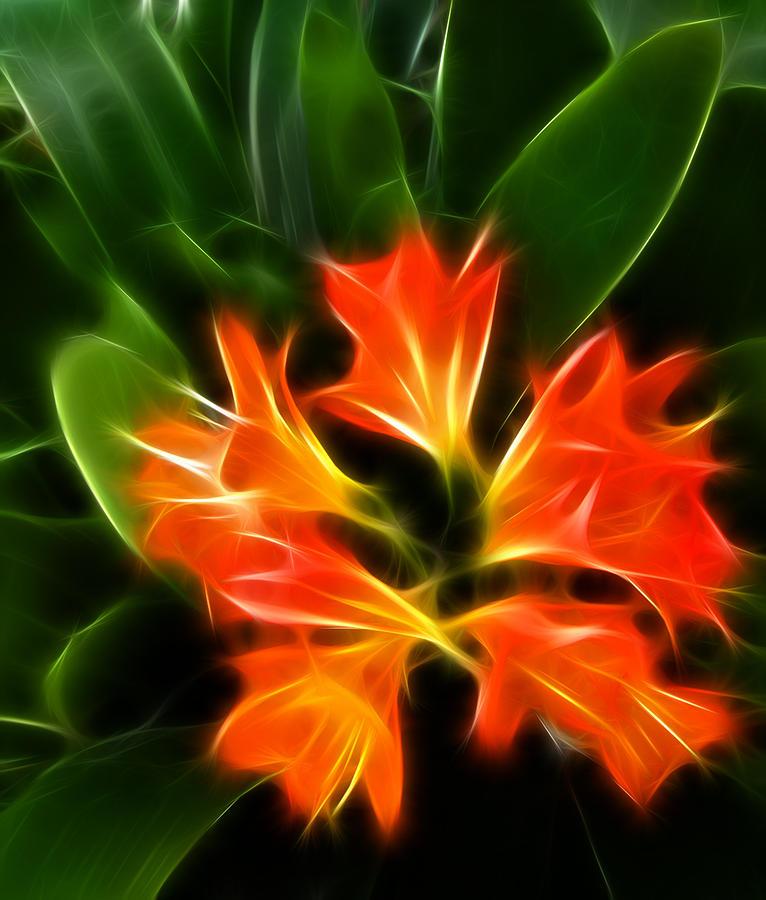 Flower Digital Art - Let It Glow by Fabian Cardon