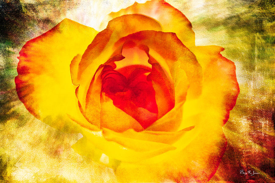 Rose Photograph - Floral - Rose - Let It Shine by Barry Jones