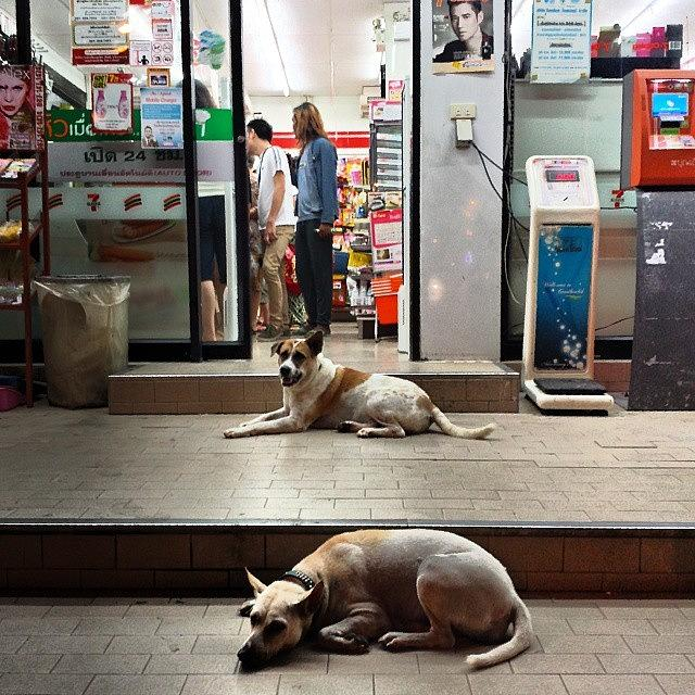 Let Sleeping Dogs Lie Where They May Photograph by Mr Photojimsf