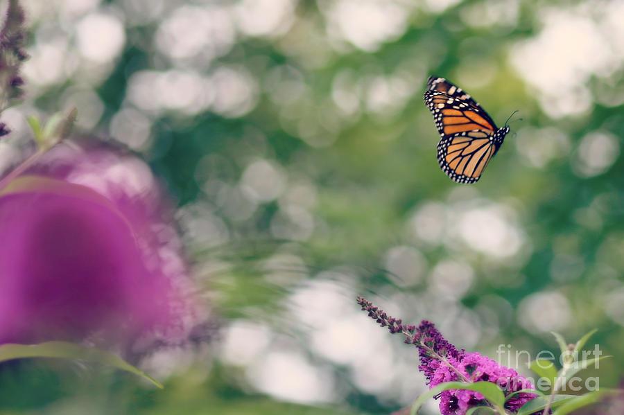 Butterfly monarch Butterfly Monarch Float Fly Floating Flying butterfly Bush Photograph - Let Your Beauty Show by Brenda Schwartz