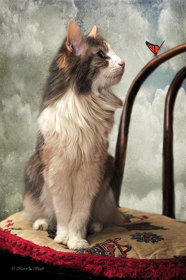 Cat Photograph - Lets Be Friends by Karen Slagle