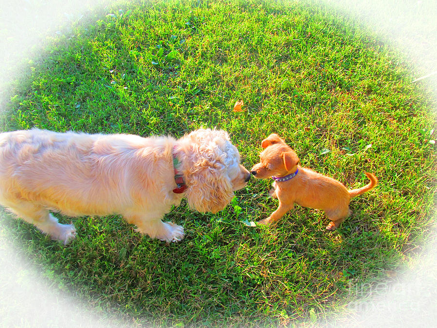 Dogs Photograph - Lets Be Friends by Tina M Wenger