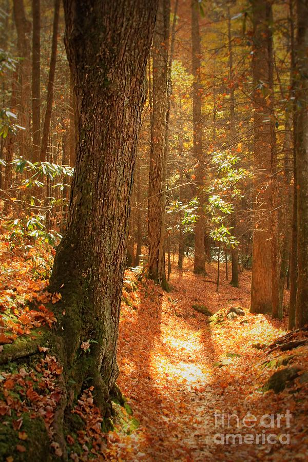 Trees Photograph - Lets Take A Walk by Geraldine DeBoer