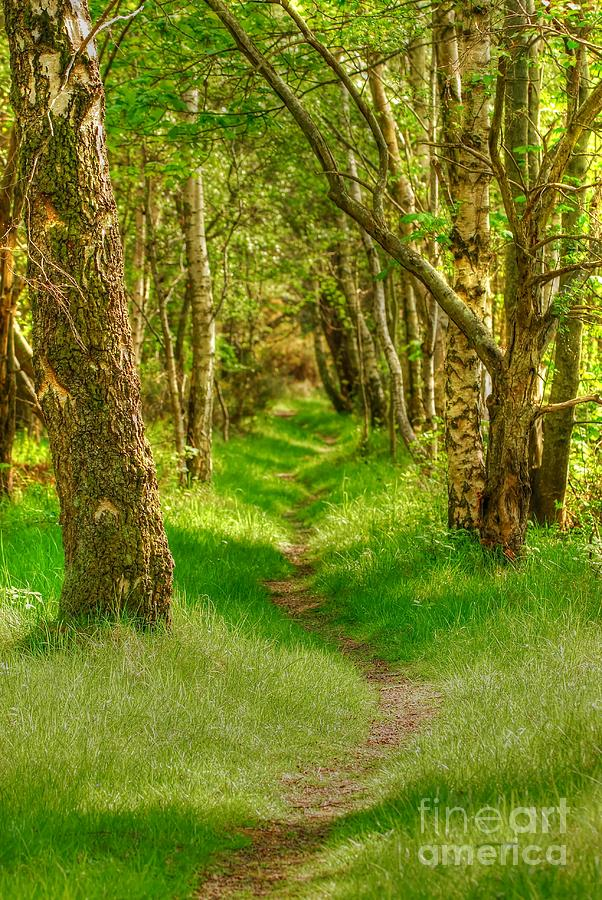 Woodland Walk Photograph - Lets Walk Along The Sunlit Woodland Path by John Kelly