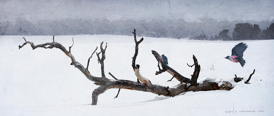 Birds Painting - Letting Go  -  Lewis Woodpeckers by R christopher Vest