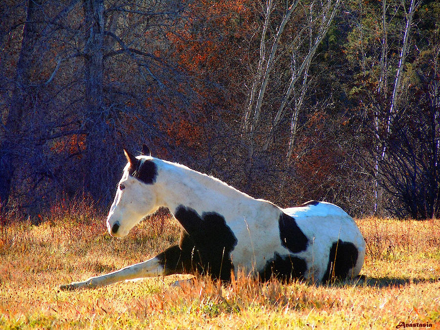 Horse Photograph - Liberty Bliss In The Fields Of The Lord by Anastasia Savage Ealy