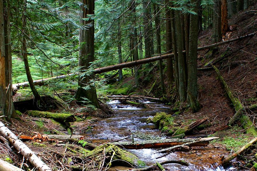 Nature Photograph - Liberty Creek 2014 #5 by Ben Upham III
