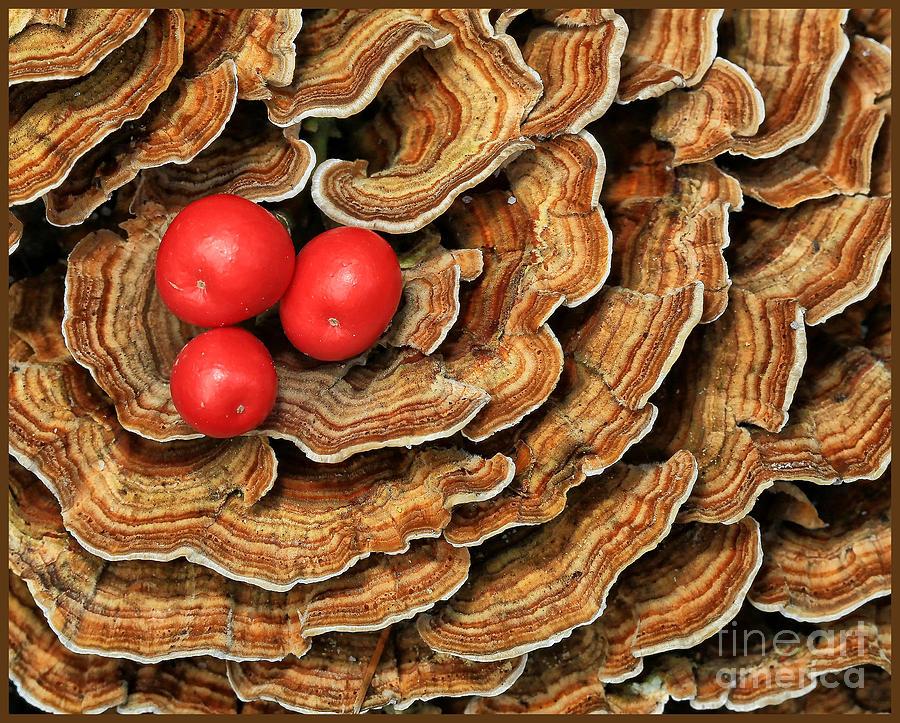 lichen and berries by Bobbie Turner