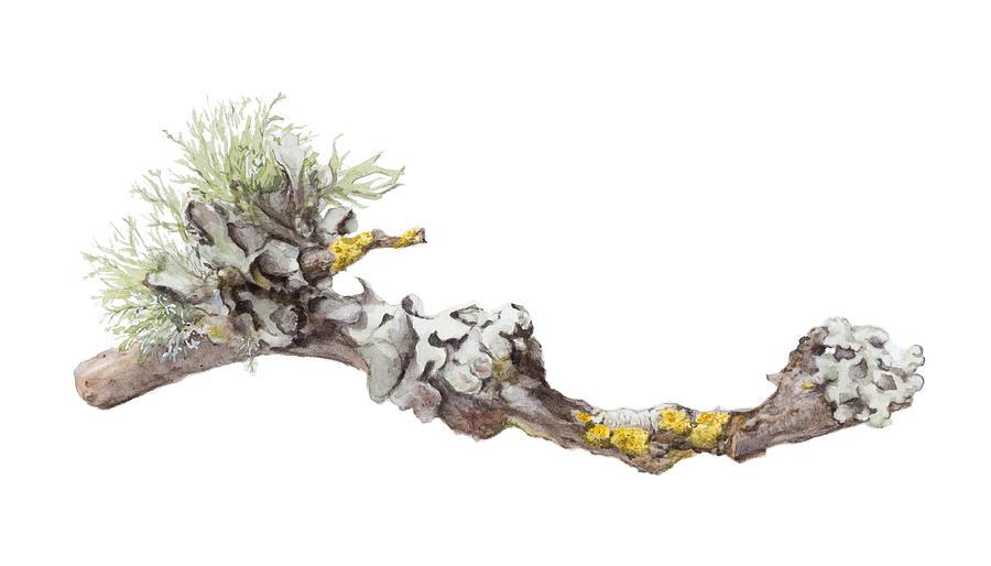 Lichen Painting - Lichen by Elizabeth R Smith