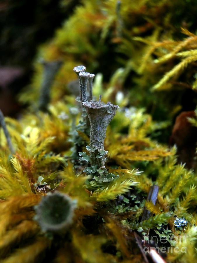 Lichen Photograph - Lichen Hill by Steven Valkenberg
