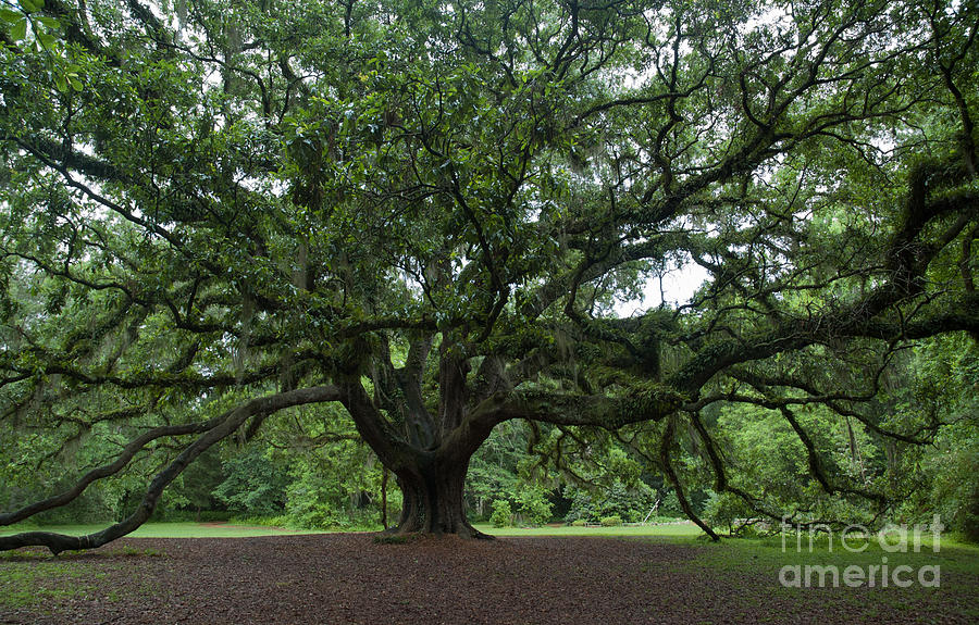 Lichgate Oak by Kathi Shotwell