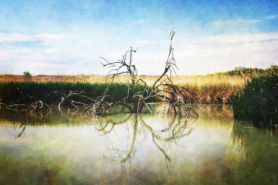 River Photograph - Life And Death by Judy Hall-Folde