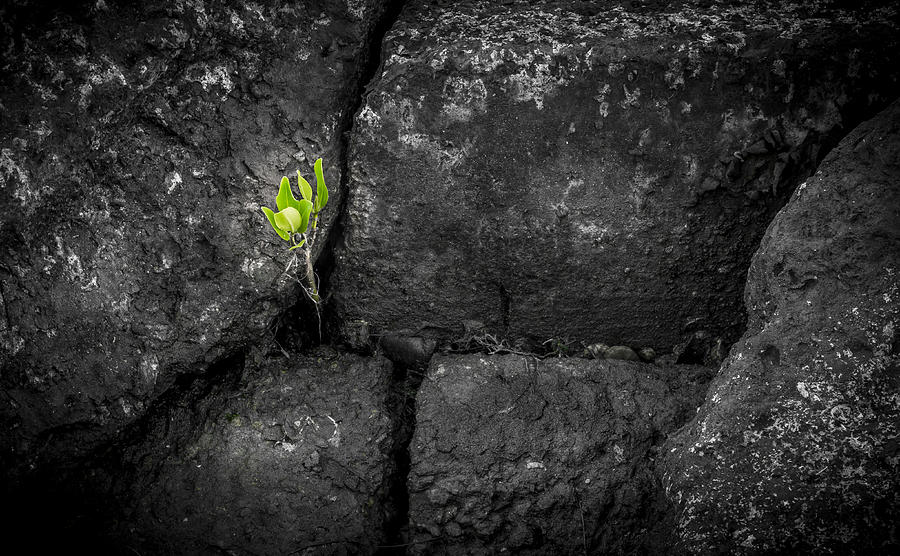 Life Finds A Way Photograph - Life Finds A Way by Marvin Spates
