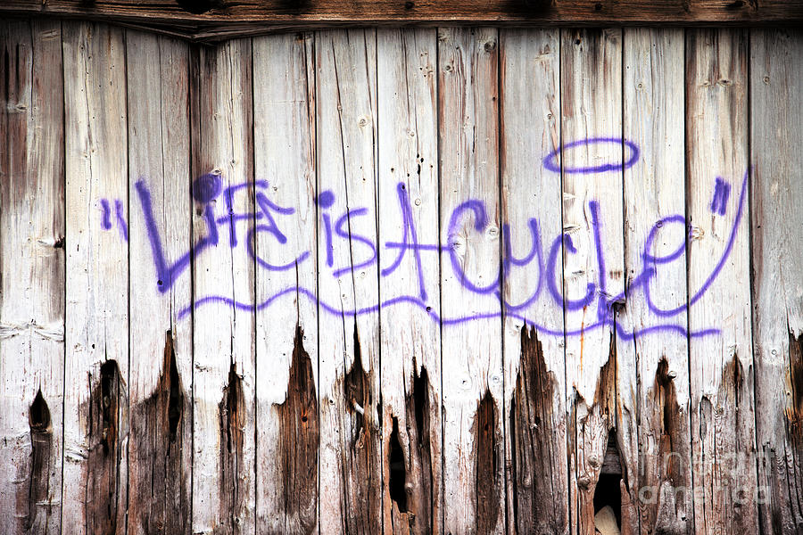 Graffiti Photograph - Life Is A Cycle by Amanda Barcon
