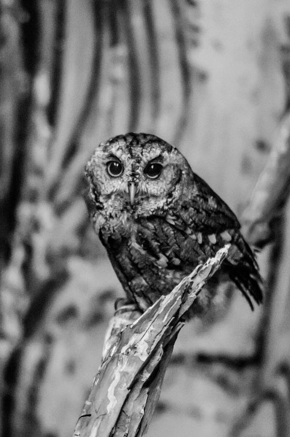 Owl Photograph - Life Is A Hoot by Jason Brow