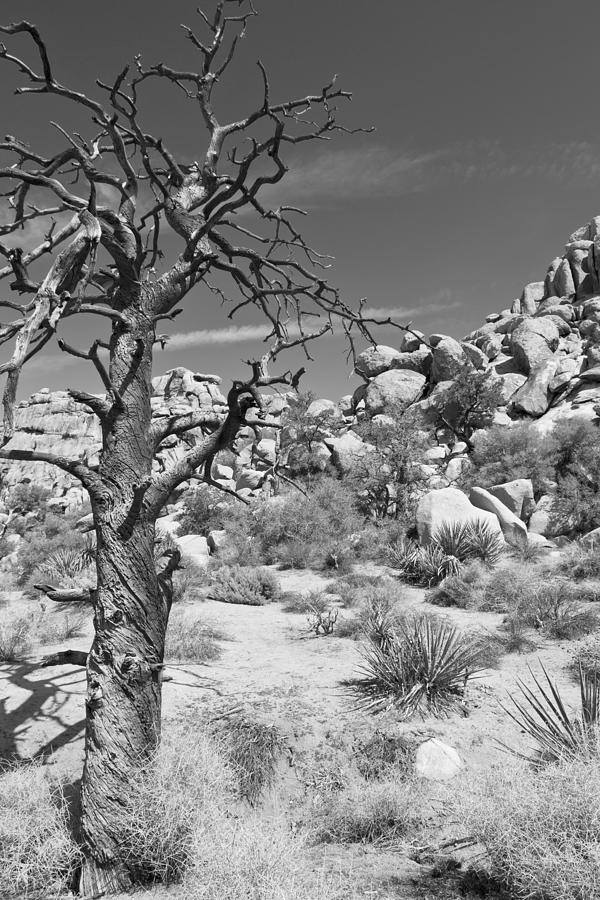 Joshua Tree National Park Photograph - Life Is A Struggle by Mike Herdering