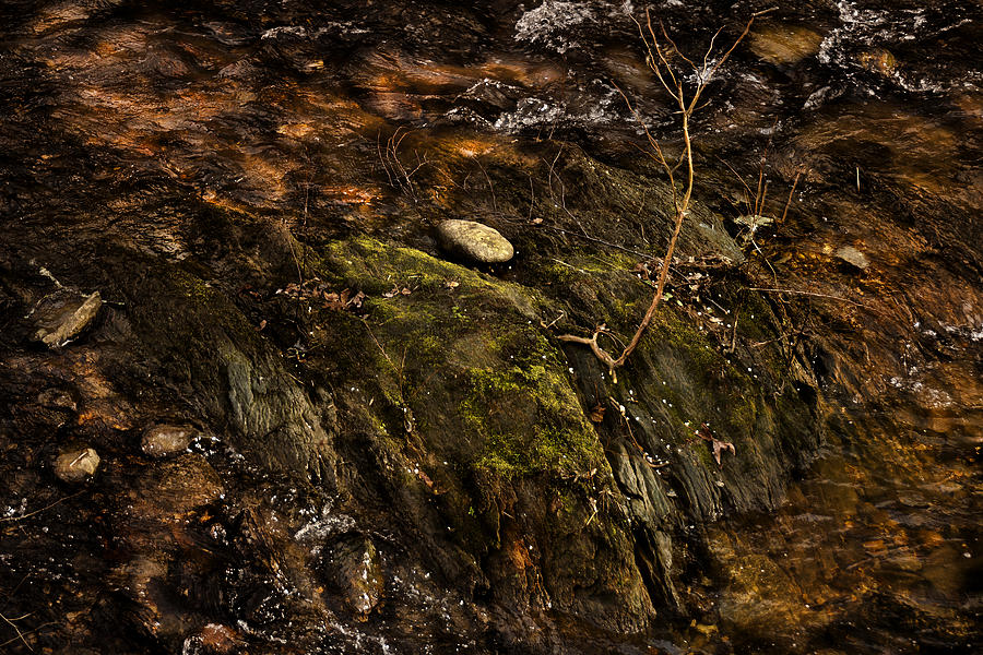 Landscape Photograph - Life... by Mario Celzner