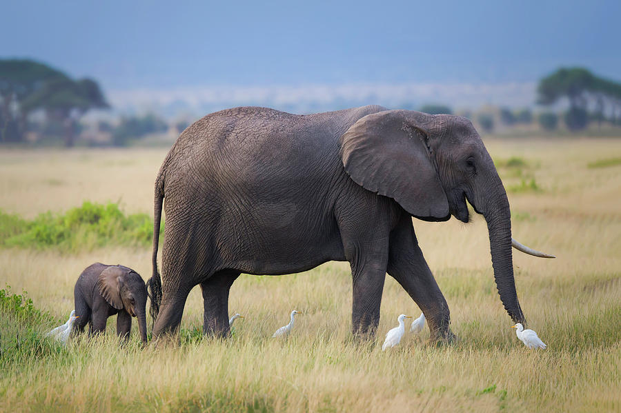 Elephant Photograph - Life by Young Feng