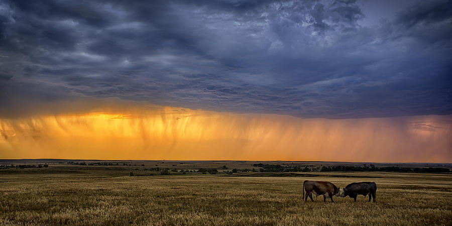 Ranching Photograph - Lifeblood by Thomas Zimmerman