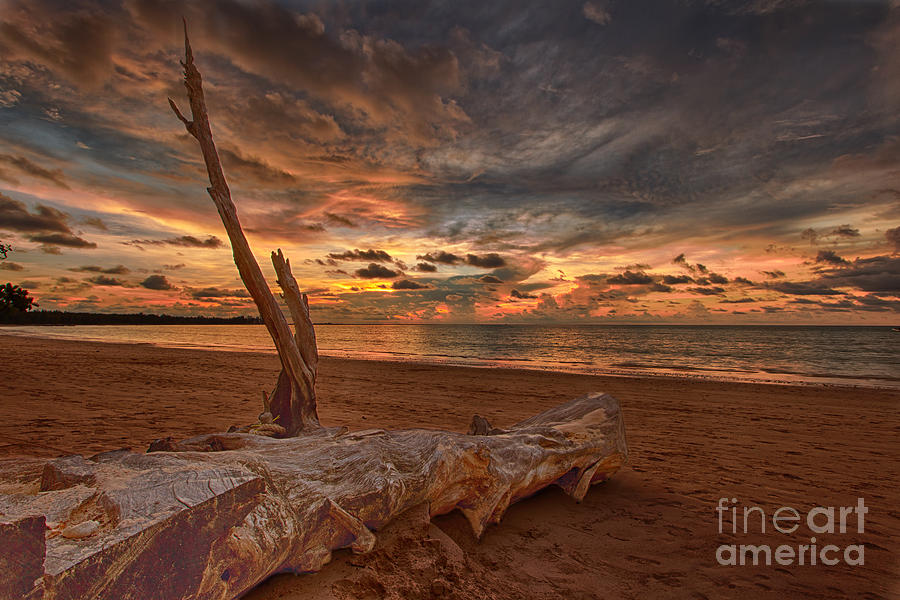 Driftwood Photograph - Lifes A Beach by Pete Reynolds