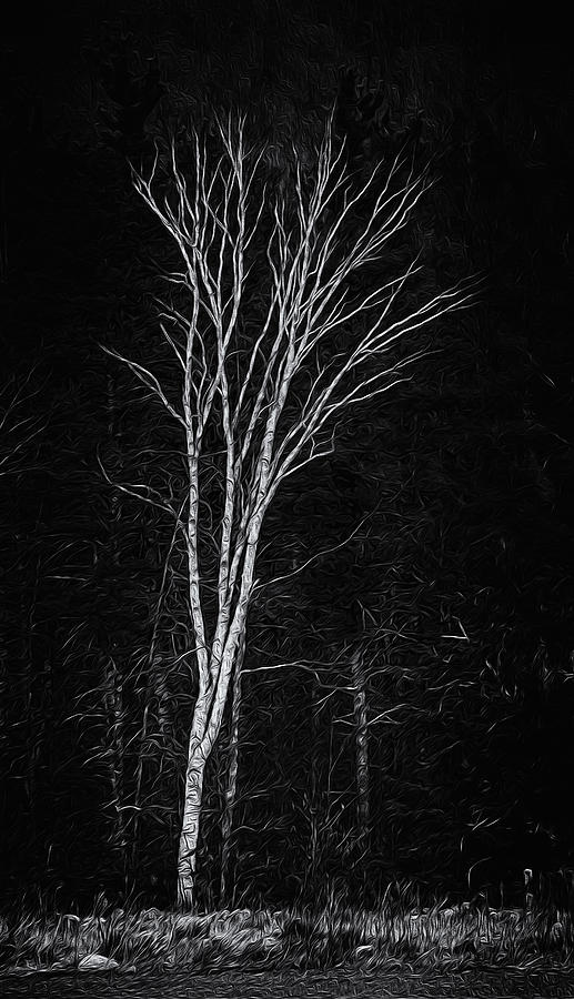 Lifes A Birch No.2 Photograph