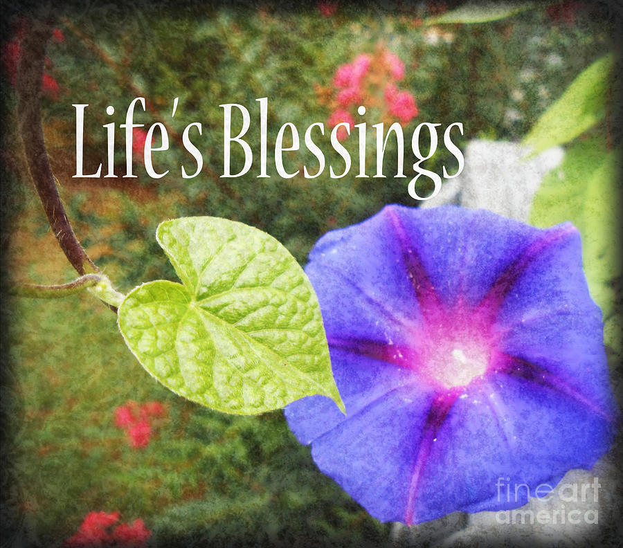 Botanical Photograph - Lifes Blessings by Eva Thomas