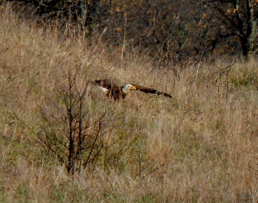 Eagle Photograph - Lift Off by Wild Thing