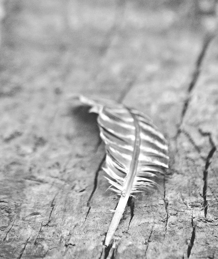 Lonely Photograph - Light As A Feather by Chastity Hoff