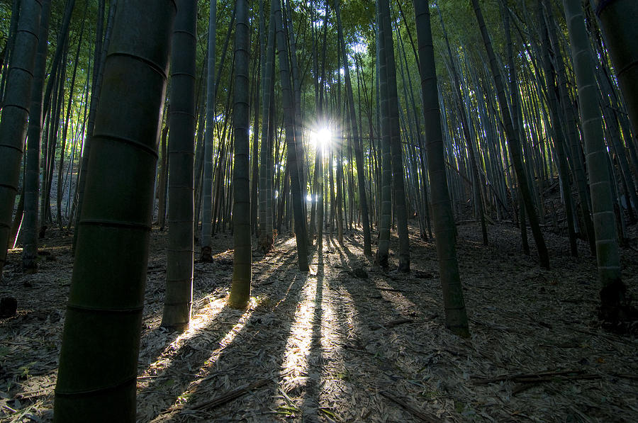 Bamboo Photograph - Light At The End by Aaron Bedell