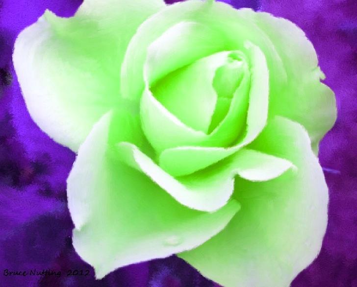 Light Green Roses Light Green Rose Paint...