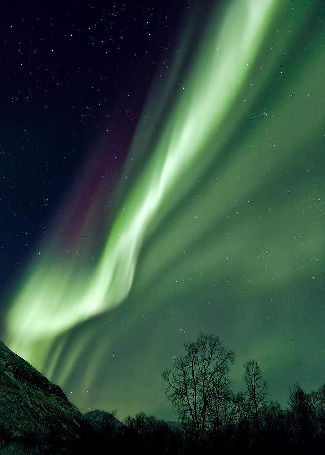Aurora Photograph - Light In The Sky by Dave Bowman