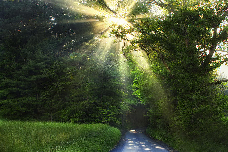 Light Photograph - Light In The Woods by Andrew Soundarajan