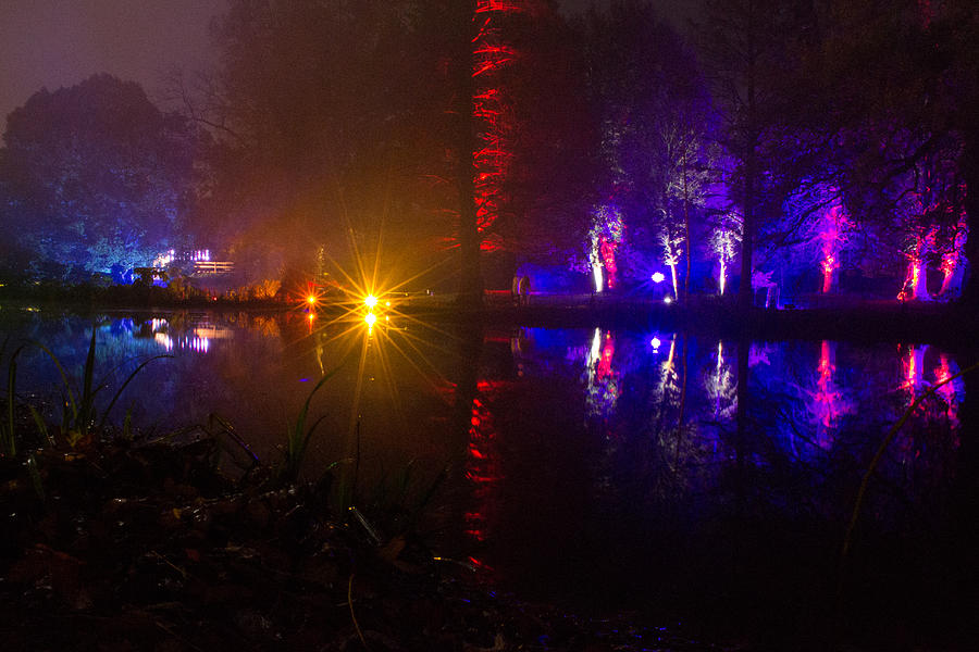 Enchanted Woods Photograph - Light Reflections by Andrew Lalchan