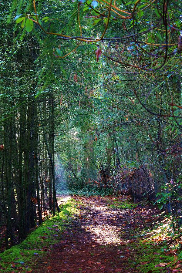 Trees Photograph - Light The Way by Bruce Bley