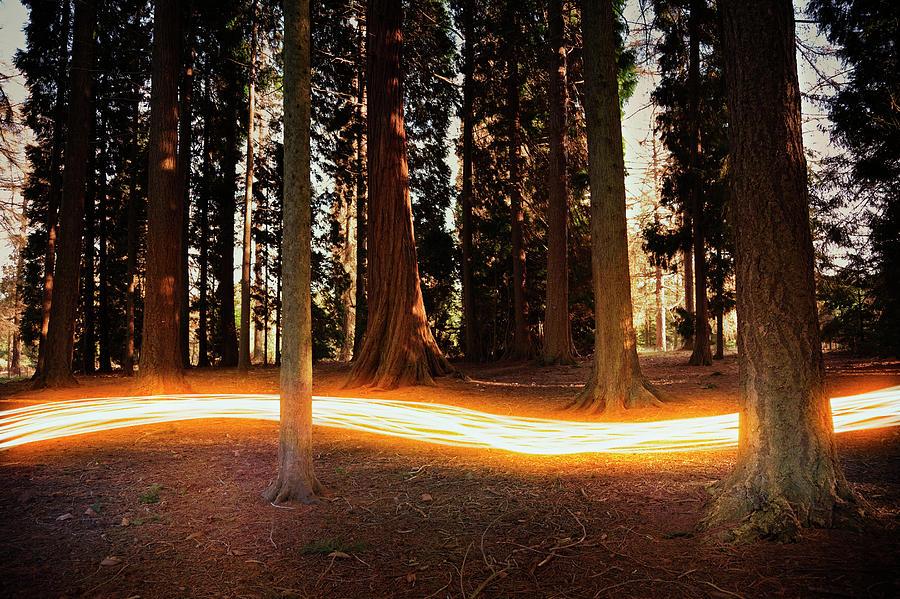 Light Trail Passing Around Trees Photograph by Robert Decelis Ltd