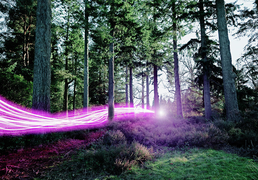 Light Trails Passing Through Woods Photograph by Robert Decelis Ltd