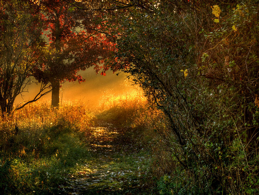Path Photograph - Lighted Path by Thomas Young