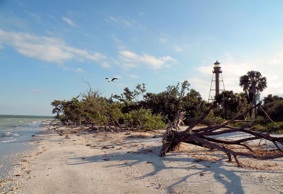 Beach Photograph - Lighthouse Beach by Rosalie Scanlon