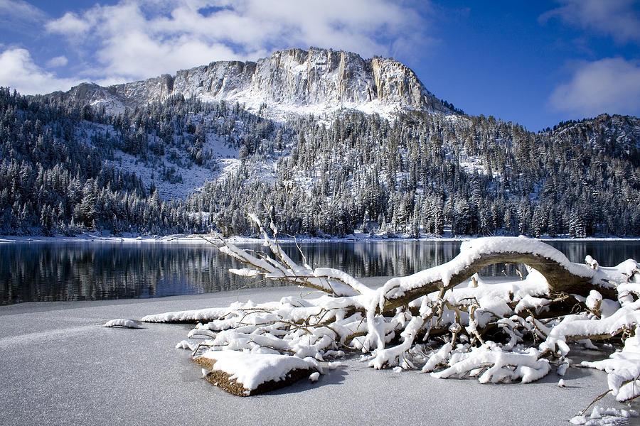 Snow Photograph - Lightly Powdered by Chris Brannen